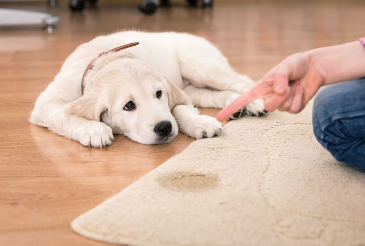 Pet Stain Removal, San Antonio, Texas